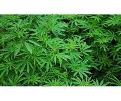 Buy High Quality Grade(%99.96) Mephedrone (2- methylamino 1-one), Buy Weed online,cocaine etc..